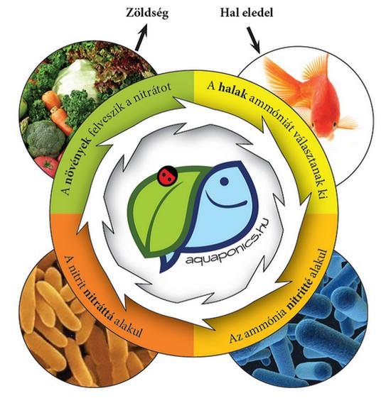 Akvapónia, a növénytermesztés forradalma